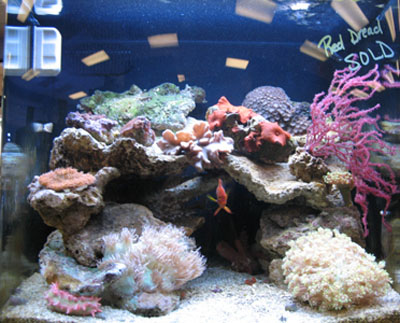 Coral Aquarium Supplys