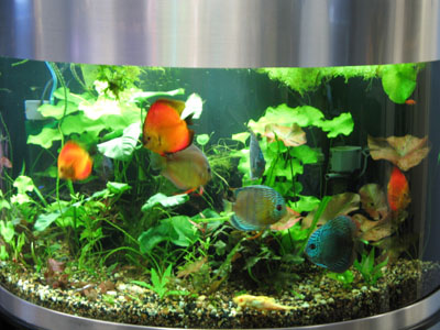 Great Aquariums at Great Prices !