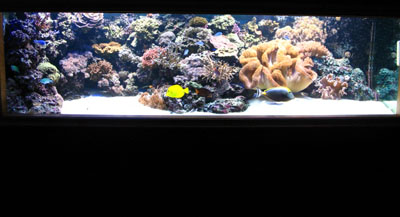 Reefs, Corals and MaArine Saltwater Aquarium Fish